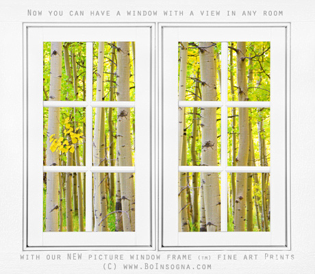 aspen forest white picture window frame view600m 460x400 Golden Beams Of Sunlight Shining Down