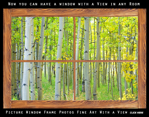 aspen tree forest rustic wood picture window frame 600mark 509x400 Beautiful Chestnut Horse in the Fall Aspen Colors