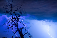 Lightning-Tree-Silhouette-38