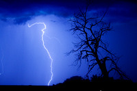 Lightning-Tree-Silhouette-800