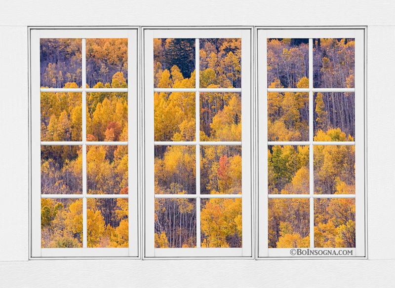 Autumn Aspen Trees White Picture Window Frame View