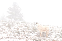 Horse-Winter-Season-Snow-Fog