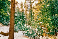 Winter_Forest_Golden_Light