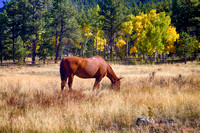 Autumn-High-Country-Horse-Grazing