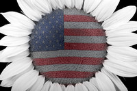american_sunflower_power