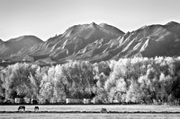 Boulder County Colorado Flatirons Autumn View BW