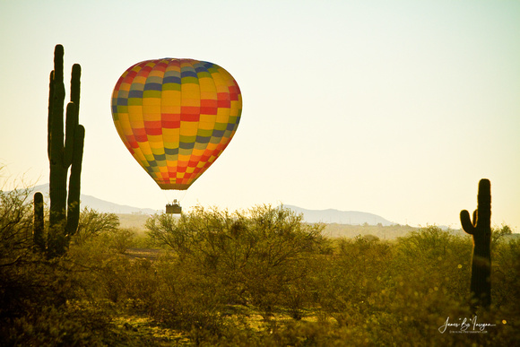 Hot Air Balloon in the beautiful lush Arizona desert with giant saguaro cactus.  Fine art nature landscape photography prints and canvas art by James Bo Insogna (C) 2011.