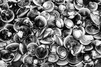 Fresh_Clams_In_Black_And_White