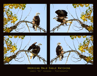 American-Bald-Eagle-Watching-Poster