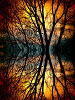 Sunset-Tree-Silhouette-Abstract-3